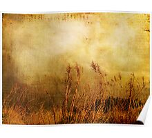 Beach Grasses of Gold... Poster