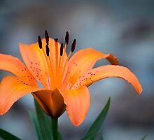 Orange. by Lindsay Osborne
