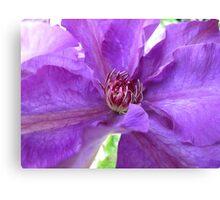 Purple Clematis Macro Untouched Canvas Print