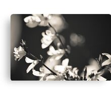 Black and White Flowers. Canvas Print