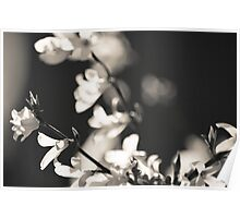 Black and White Flowers. Poster