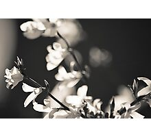 Black and White Flowers. Photographic Print