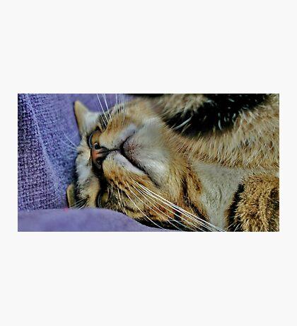 Millie Mac Hyper Cat Photographic Print