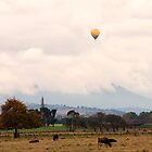 Hot Air Balloon , Yarra Valley by Pauline Tims