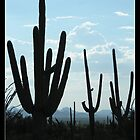 Silent Saguaro Warriors  by Kimberly Chadwick