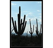Silent Saguaro Warriors  Photographic Print