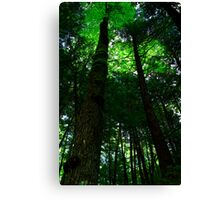 The High Above Canopy Canvas Print