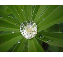 Rain diamonds Photographic Print