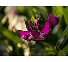 Pinkish Purple Swirls and Spirals  Photographic Print