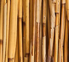 BAMBOO by Coolthings