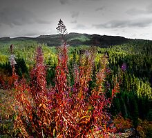 Way Up High by Charles & Patricia   Harkins ~ Picture Oregon
