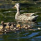 Mother of 5 by Stephen Thomas