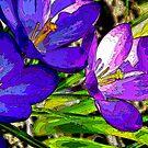 """""""Spring Crocus"""" by Gail Jones"""