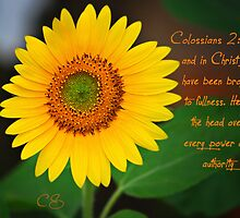 Colossians 2:10 Inspirational  by Cassandra Scarborough