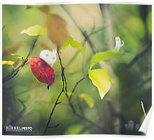 The first autumn leaf - Wandering forest 4 Poster