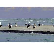 Pelicans & Seagulls Are Among Us in South Topsail, NC Photographic Print