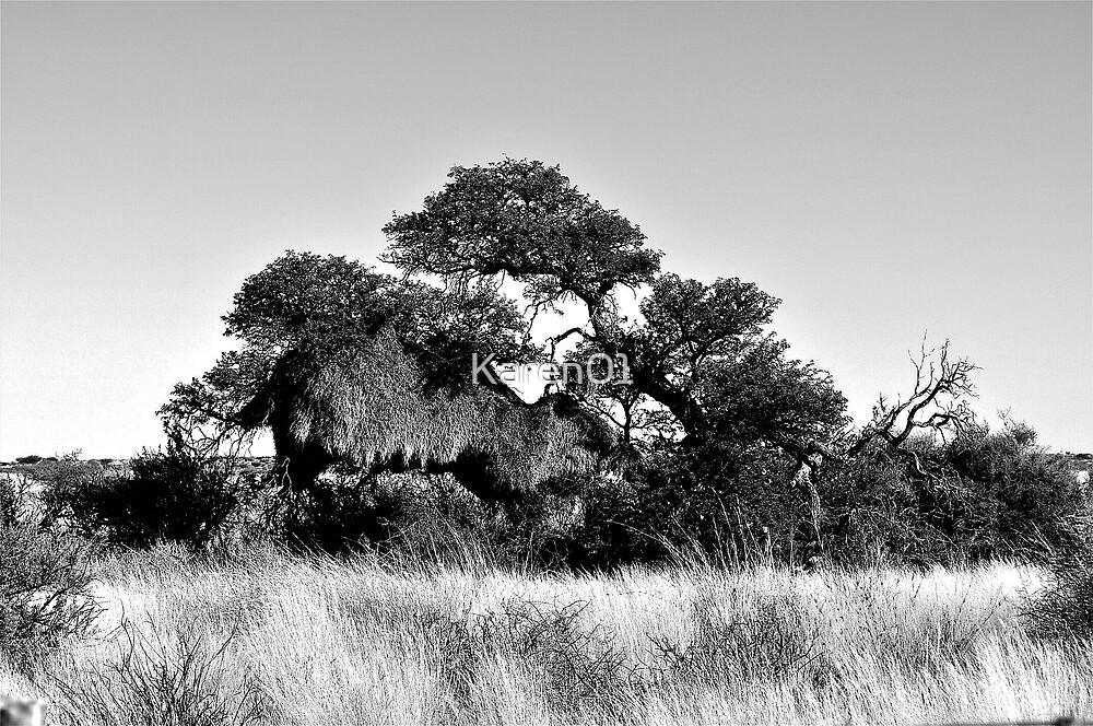 Social Weavers bird nest by Karen01