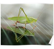 Grasshopper in Glass Poster