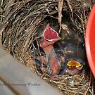 Warbler Babies by DottieDees