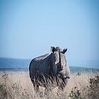 White Rhino by Cara Barron