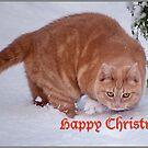 Snow? Bah, humbug! by jacqi