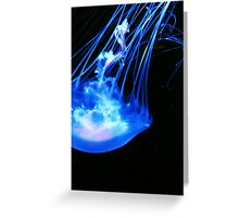 Jelly fish  Greeting Card