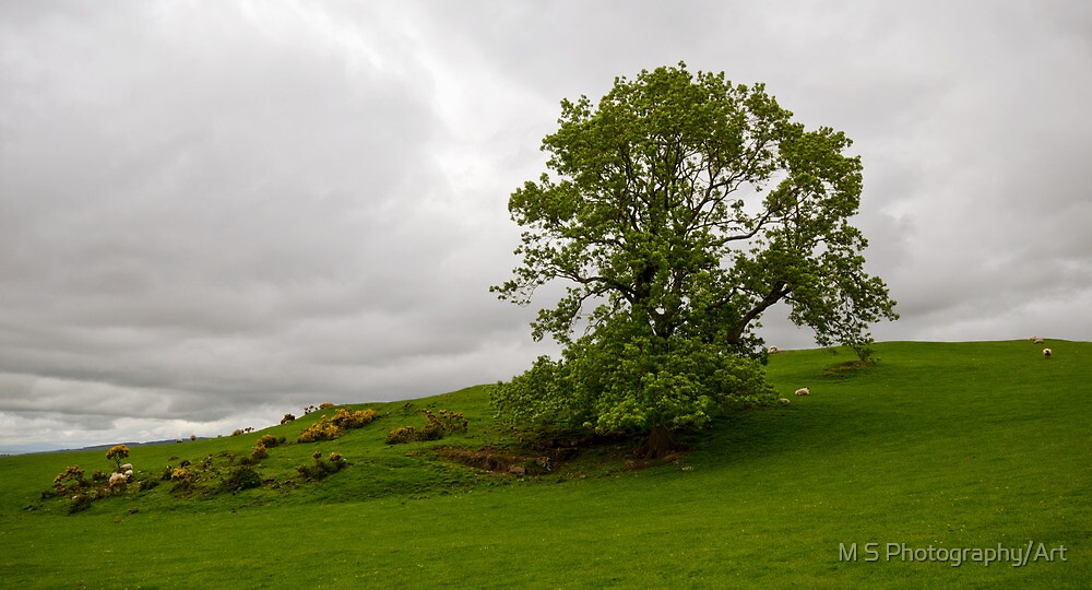 Green Pastures by M.S. Photography/Art