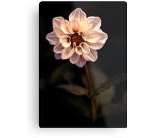 An insomniac amongst the flowers Metal Print