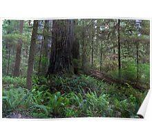 Exploring Jedediah Smith Redwoods III Poster