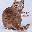 Not sure I like Christmas! by jacqi