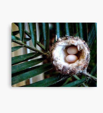 little eggs Canvas Print