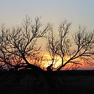 sunset abilene by Tim Horton
