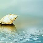 Seashell by Lyn Evans