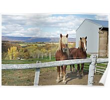 Horses Poster