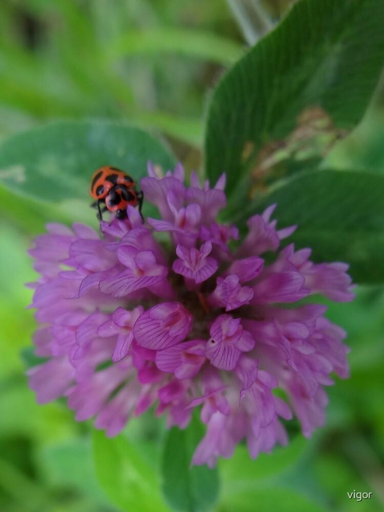 Beetle Bug by vigor