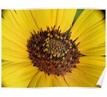 Pollenade Poster