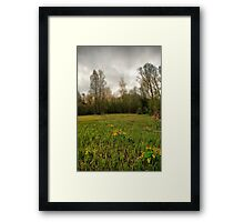 Birches,reeds and kingcups HDR Framed Print