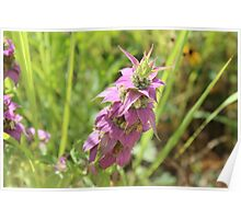 Texas Wildflowers IV Poster