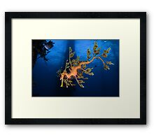 Phycodurus eques Framed Print