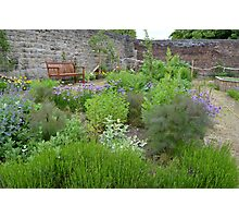 HERB GARDEN Photographic Print