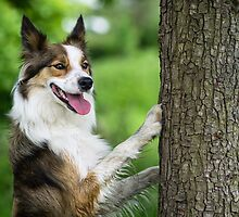 The Dog and the Tree by Karen Havenaar