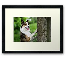 The Dog and the Tree Framed Print