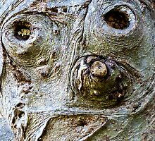Ugly Bark Face. by ronsphotos