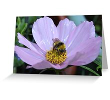 Bumble Bee and Cosmos Greeting Card