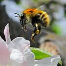 Pollinating Bumblebee by George Crawford