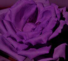 Purple does it by Helen69
