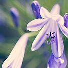 Purple Haze by Josie Eldred