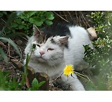 Who Put that There ?? Photographic Print