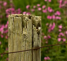 The Old Fence Post by rubyrainbow