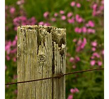 The Old Fence Post Photographic Print